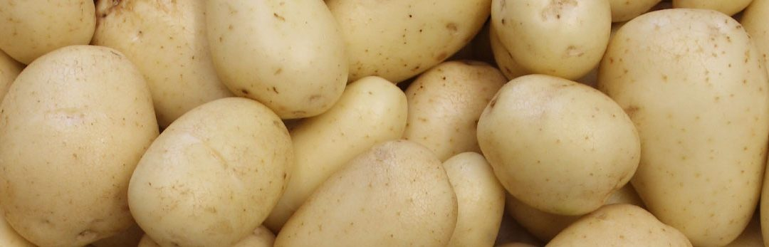 Improving potato production with EcoCulture fertilisers