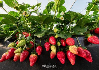 fresa ecoculture 3