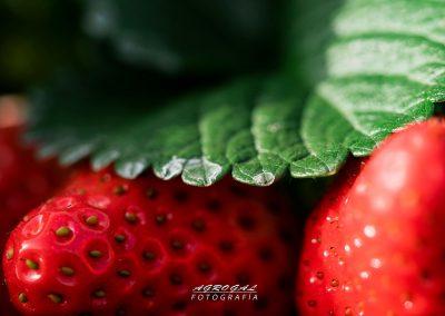 fresa ecoculture