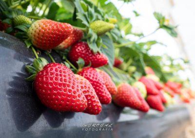 fresa ecoculture 5