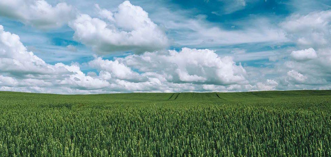 Ecoculture Biosciences registra sus productos en Ucrania y comenzará sus envíos a este país en otoño