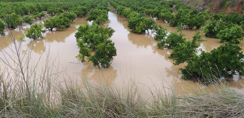EcoCulture consigue recuperar con rapidez raíces y plantas en cultivos afectados por la reciente dana
