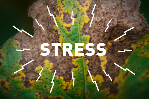 REDUCING STRESS VIA ENHANCED PLANT HEALTH