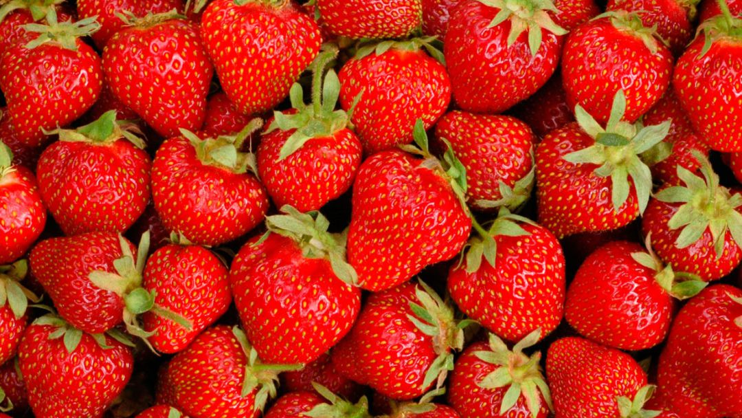 Ecoculture consigue paliar las pérdidas en variedades de fresa problemáticas para la adquisición de color