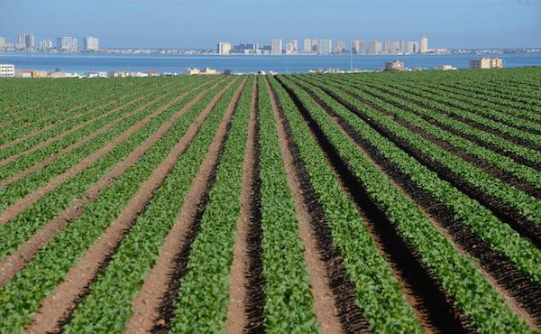 Ecoculture plantea soluciones a los agricultores del campo de Cartagena ante la limitación en los cultivos para proteger las aguas subterráneas y la calidad ecológica del Mar Menor