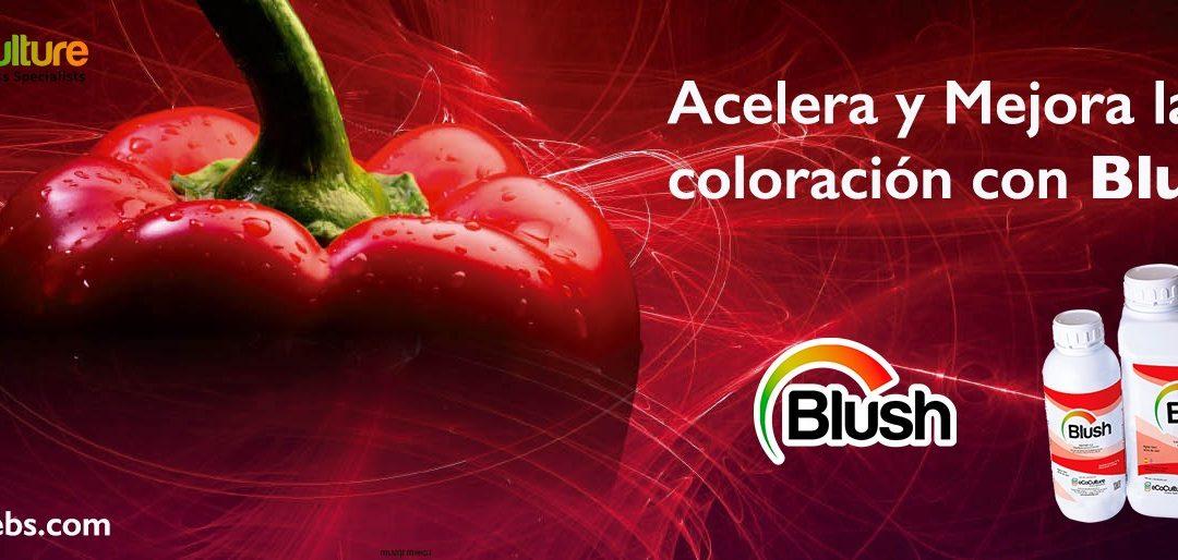 Ecoculture adelanta y mejora la coloración y el brillo en cultivos de pimiento california