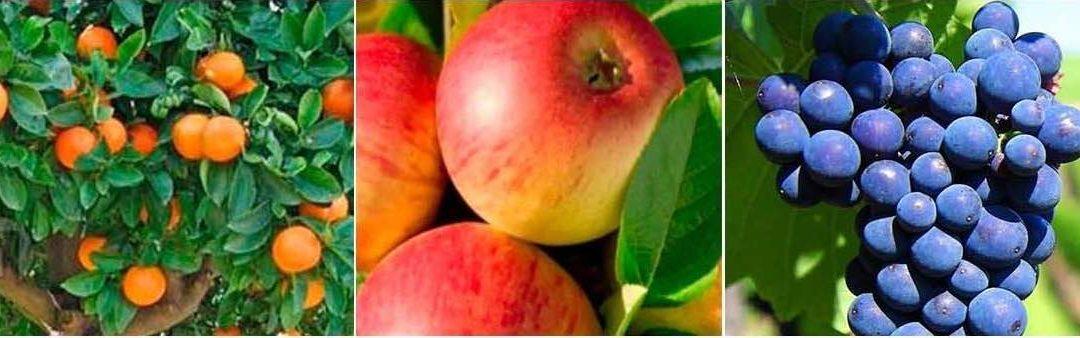 La estrategia EcoCulture para reducir la alternancia en frutales.