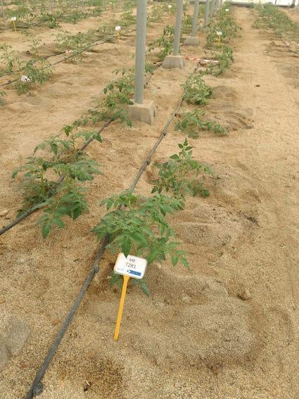 EcoCulture comienza un nuevo y ambicioso proyecto en Tecnova para reducir el aporte de agua de riego