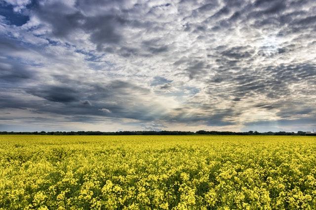 Ecoculture logra el permiso de la Sanidad ucraniana como paso previo a distribuir sus productos en el país