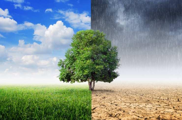EcoCulture se convierte en el mejor aliado para combatir el cambio climático