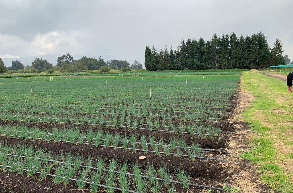EcoCulture ultima su desembarco en Colombia y abarcará más de la mitad del territorio en Sudamérica