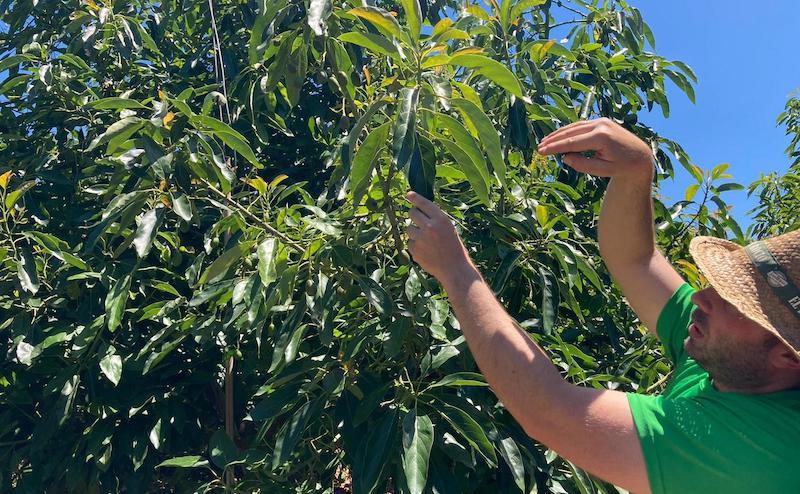 Deshidratación, rajado de fruto o estrés hídrico, problemas para los agricultores en cultivos de verano